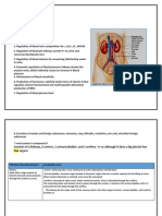Renal System Anatomy