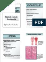 (Morfo IV - Aula 2 - Mecanismos de Adaptações Celulares)
