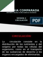 PRESENTACION_CIRCULACION (1).pptx
