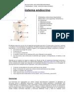 Sistema Endocrino (generalidades)