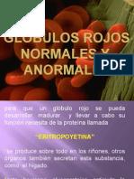 g.rojos Normales y Anormales