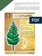 El Árbol de Oyamel Es Endémico