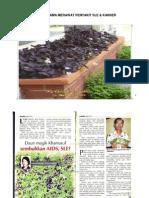 DAUN RERAMA MERAWAT PENYAKIT SLE.pdf