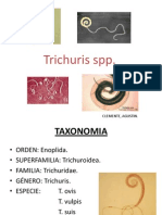 Trichuris Spp 2015