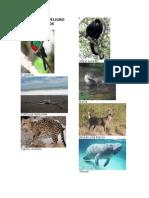 Animales Peligo de Extincion Guatemala