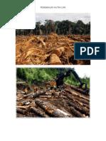kebakaran hutan kebakaran hutankebakaran hutankebakaran hutan