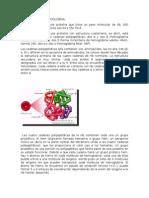 Anatomía de La Hemoglobina