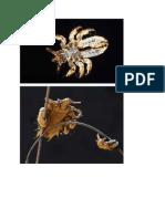 Biologi Scabies