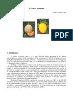 O Cultivo Do Melão