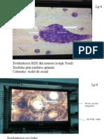 Biocel Examen Practic Optic