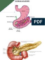 Pancreas Presentation