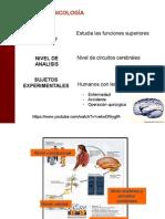 Generalidades de la Neuropsicología 2.ppt