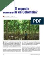 89 Forestal Reforestar