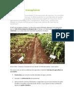 Agricultura y Transgénicos