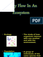 PowerPoint Energy Flow in an Ecosystem