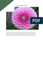 Flor Nacional de México