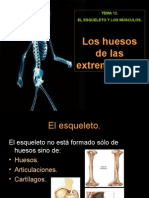 3 Los Huesos de Las Extremidades