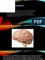 El Cerebro