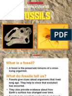 Sw Powerpoint Fossils