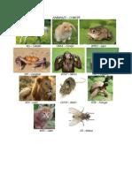 Animales en Kaqchikel [Ilustrado]