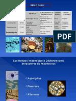 Lectura micotoxinas