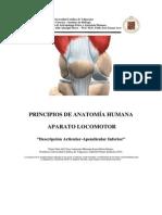 Anatomia Descripcion Articular y Apendicular Inferior