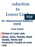 Introduction to Lower Limb Final