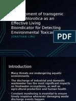 Development of Transgenic Elysia Chlorotica
