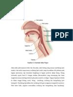 Anatomi Jalan Napas