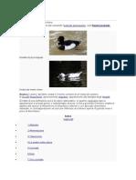 Anatra - Duck - Pato