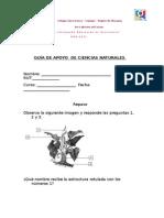 Guía de apoyo 2 - 27.07.2015