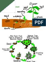 ciclo plantas en inglés