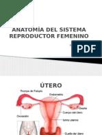 Anatomía Del Sistema Reproductor Femenino
