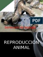 Sistema Reproductor Animal