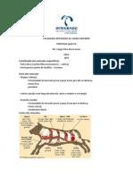 Miologia Veterinária