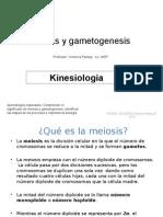 Meiosis y Gametogenesis