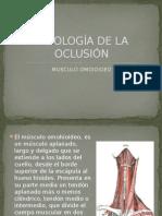 Fisiología de La Oclusión
