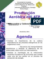 Mitocondriaycadenarespiratoriafinal Copia 141201092936 Conversion Gate02