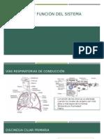 Estructura y función del sistema respiratorio.pptx