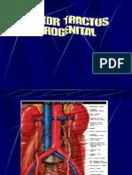 Kul-tumor Traktus Urogenital