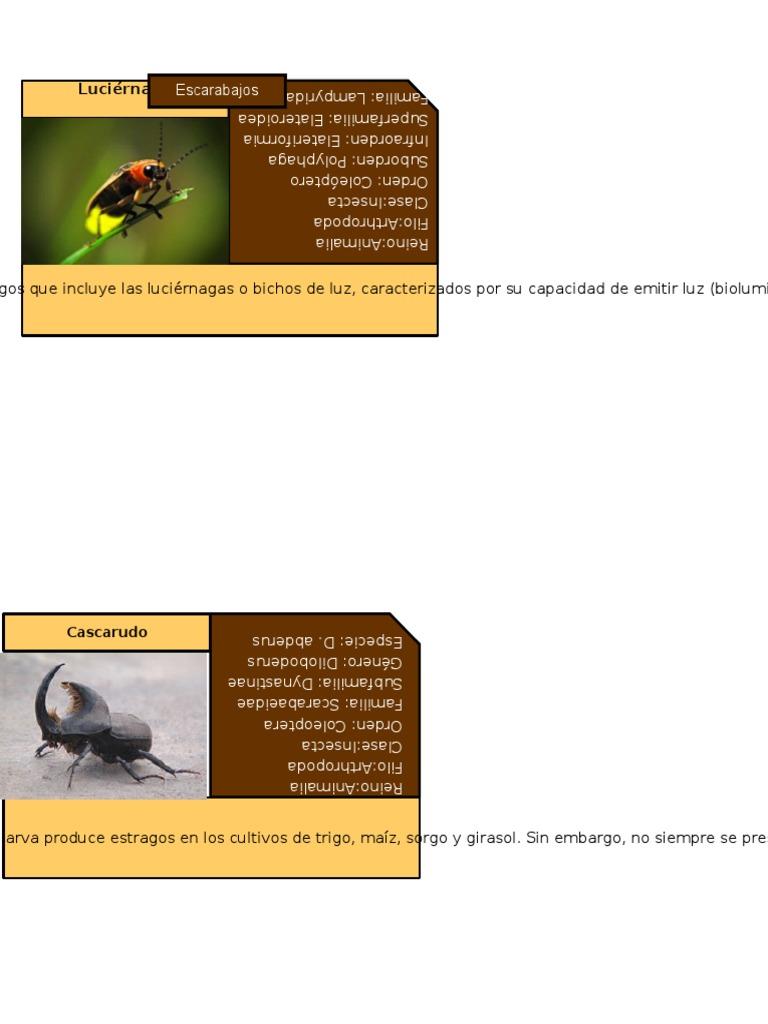 Insectos Catalogo