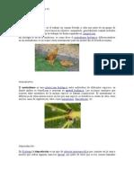 Ecologia_carlos vargas