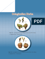 30 Selaginellae Herba