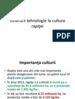Rapita Itinerarii tehnologie la cultura  rapiţei