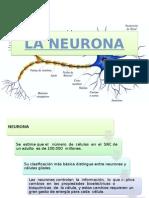 CLASE Neurona