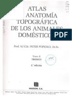 Tomo II · Tronco