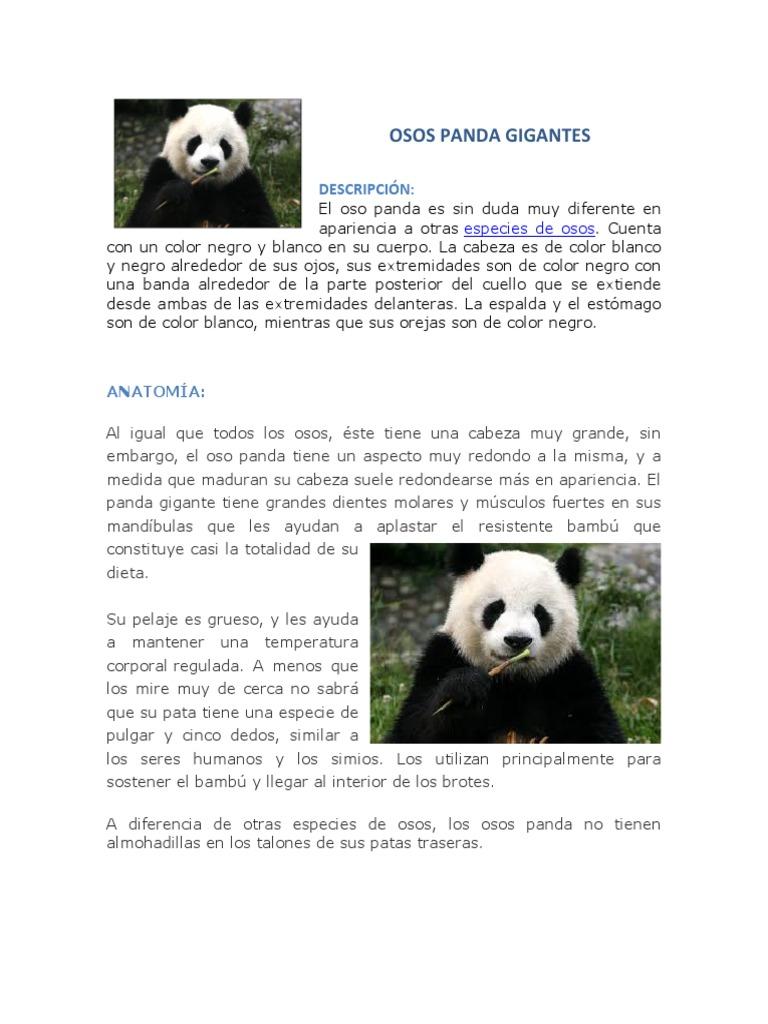 Contemporáneo Anatomía Panda Rojo Viñeta - Anatomía de Las ...