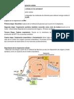 Gluclisis y Respiracin Celular
