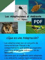 Las Adaptaciones Al Ambiente