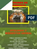 PATRONES DE CONDUCTA.pptx